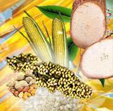 Matériels de transformation de produits TROPICAUX pour l'alimentation humaine