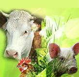 Matériels d'ELEVAGE destinés à la préparation de l'alimentation animale